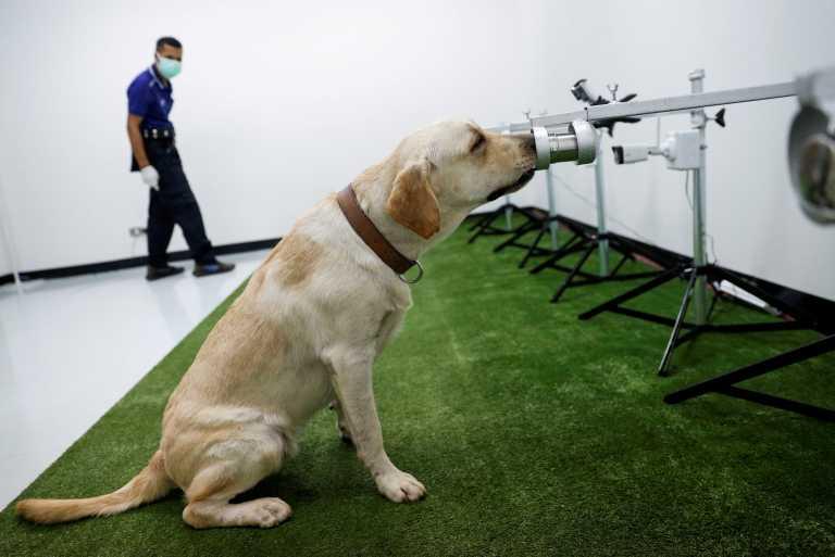 Ταϊλάνδη: Σκύλοι μυρίζουν τον ανθρώπινο ιδρώτα και ανιχνεύουν τον κορονοϊό