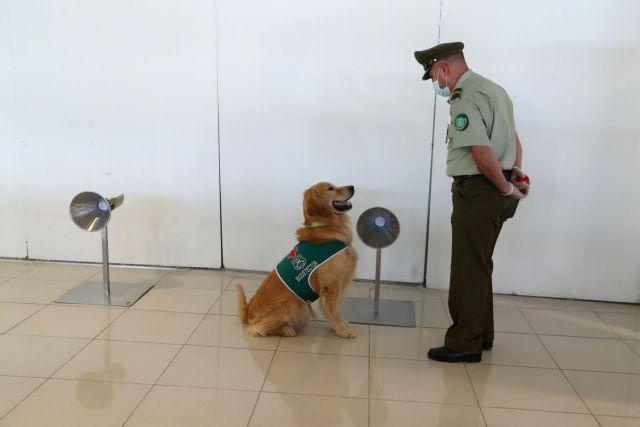 Η Ταϊλάνδη χρησιμοποιεί ειδικά εκπαιδευμένους σκύλους ως ανιχνευτές κοροναϊού
