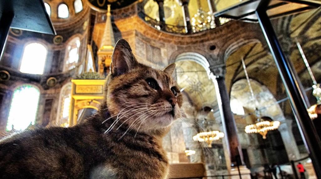 Κωνσταντινούπολη: Viral η διαφήμιση για τα μέσα μεταφοράς με πρωταγωνιστές τις περίφημες γάτες της Πόλης