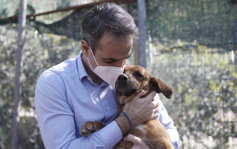 Κυριάκος Μητσοτάκης για ζώα συντροφιάς: Επιτέλους αποκτάμε σύγχρονο νομοθετικό πλαίσιο - Η ανάρτηση του Πρωθυπουργού