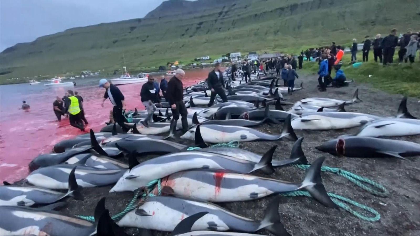 Ματωμένο φιόρδ: Διεθνής κατακραυγή για τη σφαγή 1.400 δελφινιών στις Φερόες της Δανίας